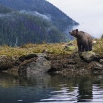 grizzly-bear-wright_1
