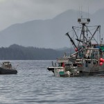 The-untold-story-behind-herring-fishery-closure-The-fish-werent-there